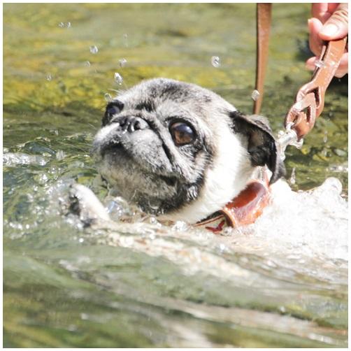 泳ぐポンチョ1