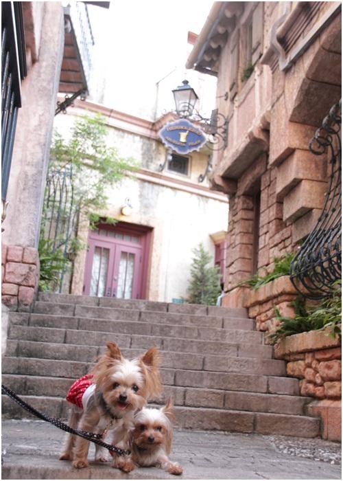 階段のクルココ