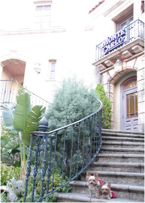 階段のクルココ2