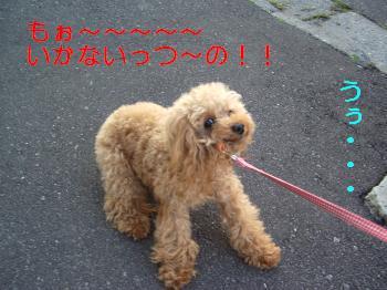 くるみ散歩2