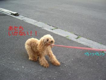 散歩くるみ1