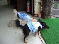 犬カフェ2