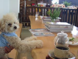 犬カフェ6
