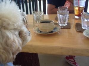 犬カフェ5