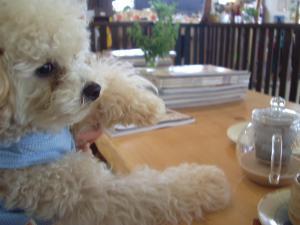犬カフェ4