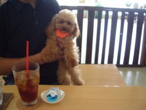 犬カフェ3