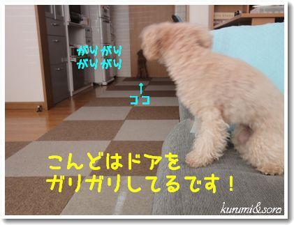 a10_20101204105704.jpg