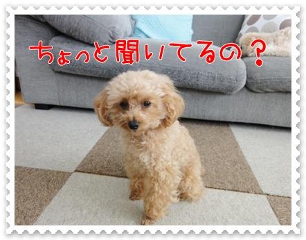 a10_20110730111040.jpg
