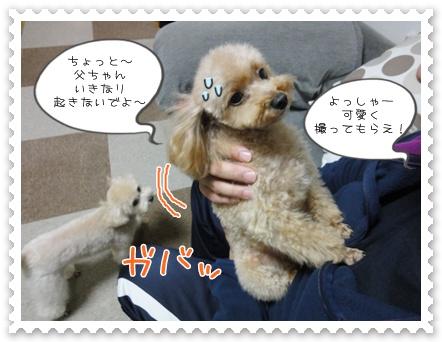 a10_20111221153210.jpg