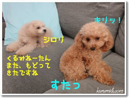 a11_20101204105708.jpg