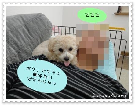 a11_20101231153814.jpg