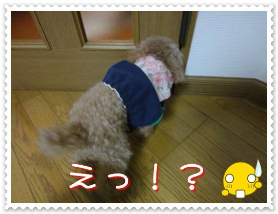 a11_20110113143814.jpg