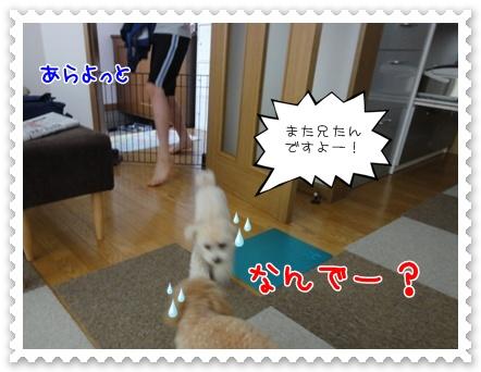 a11_20110710131820.jpg