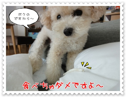 a11_20111013205530.jpg