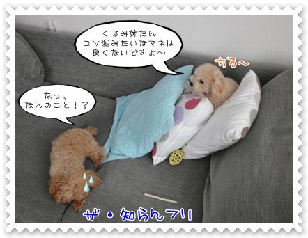 a11_20111215164944.jpg