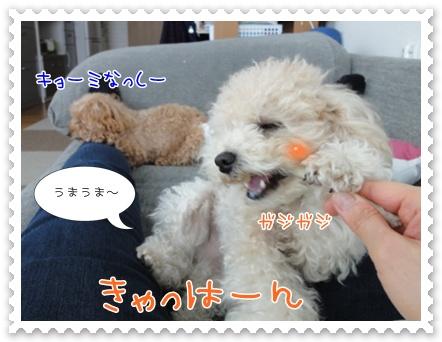 a11_20111217133828.jpg