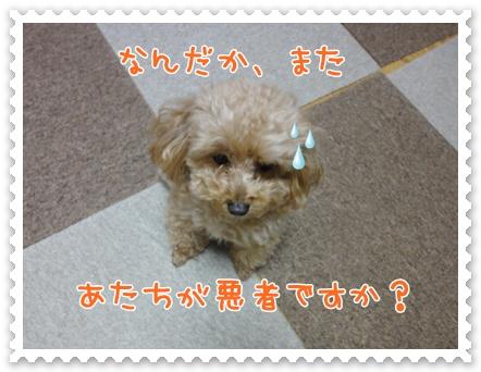 a11_20120124195648.jpg