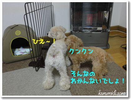 a12_20101225164931.jpg