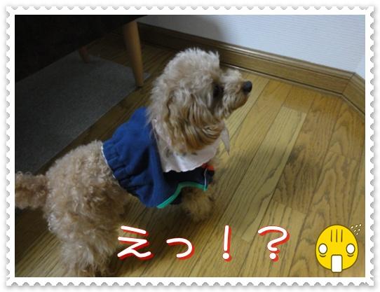 a12_20110113143814.jpg
