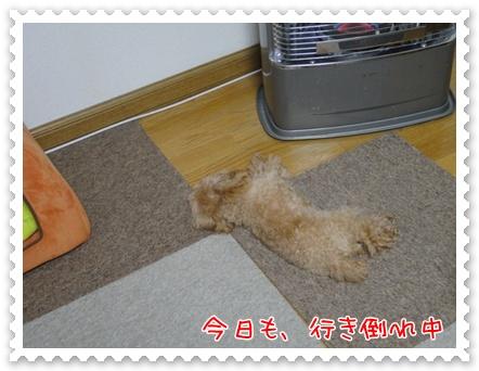 a12_20111207194644.jpg