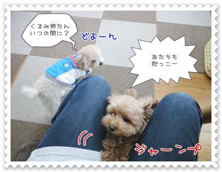a12_20111208235153.jpg