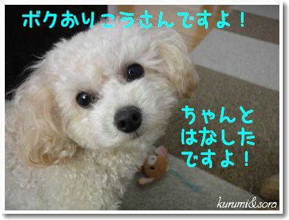 a13_20101201153850.jpg