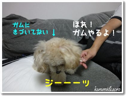 a13_20101217185224.jpg