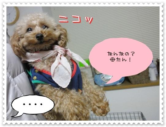a13_20110113143813.jpg