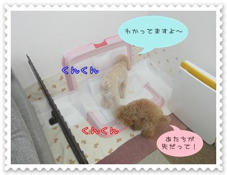 a13_20110209180131.jpg