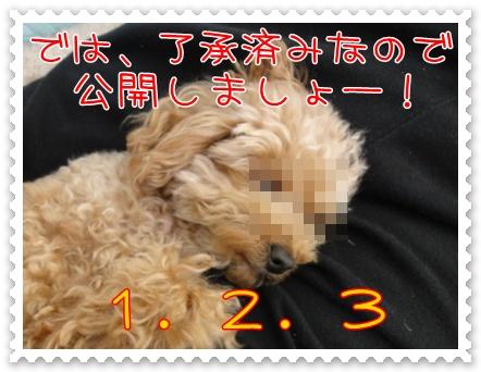 a13_20110329202700.jpg