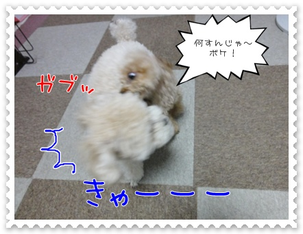 a13_20110727183604.jpg