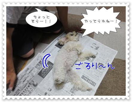a13_20110818152931.jpg
