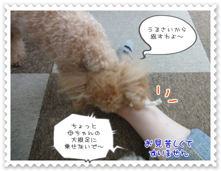 a13_20111023120357.jpg