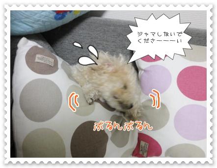 a13_20111126152647.jpg