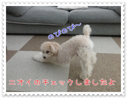 a14_20110224161316.jpg