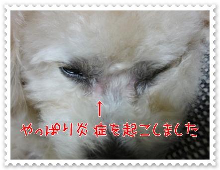 a14_20110603154800.jpg