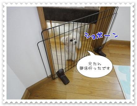 a14_20110710131856.jpg