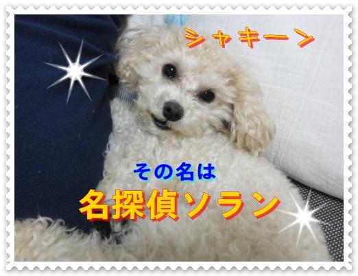 a15_20110107190037.jpg