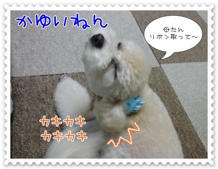 a15_20110823211228.jpg