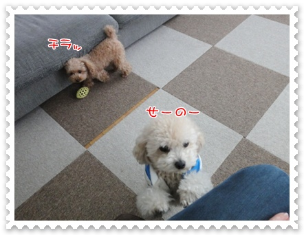 a15_20111208235411.jpg