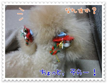 a15_20111221153246.jpg