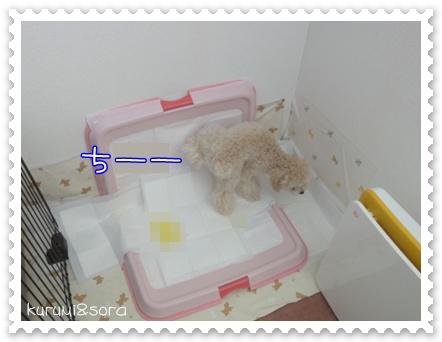 a19_20110209180307.jpg