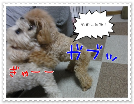 a19_20110727183636.jpg