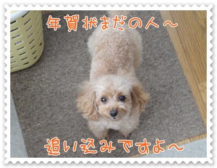 a19_20111224130319.jpg