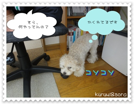 a1_20110205184941.jpg