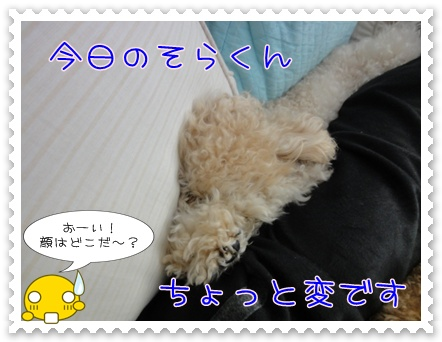 a1_20110329202524.jpg