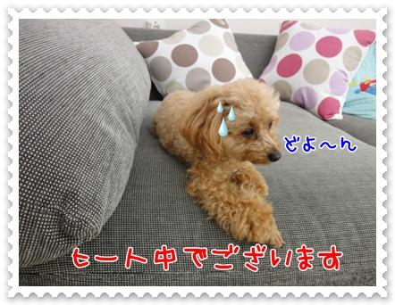 a1_20110714215917.jpg