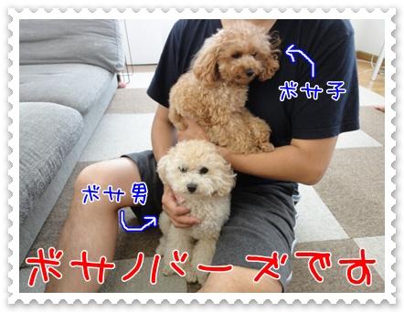 a1_20110823211117.jpg