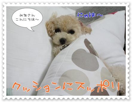 a1_20110912173951.jpg