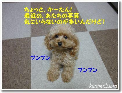 a20_20101211082853.jpg